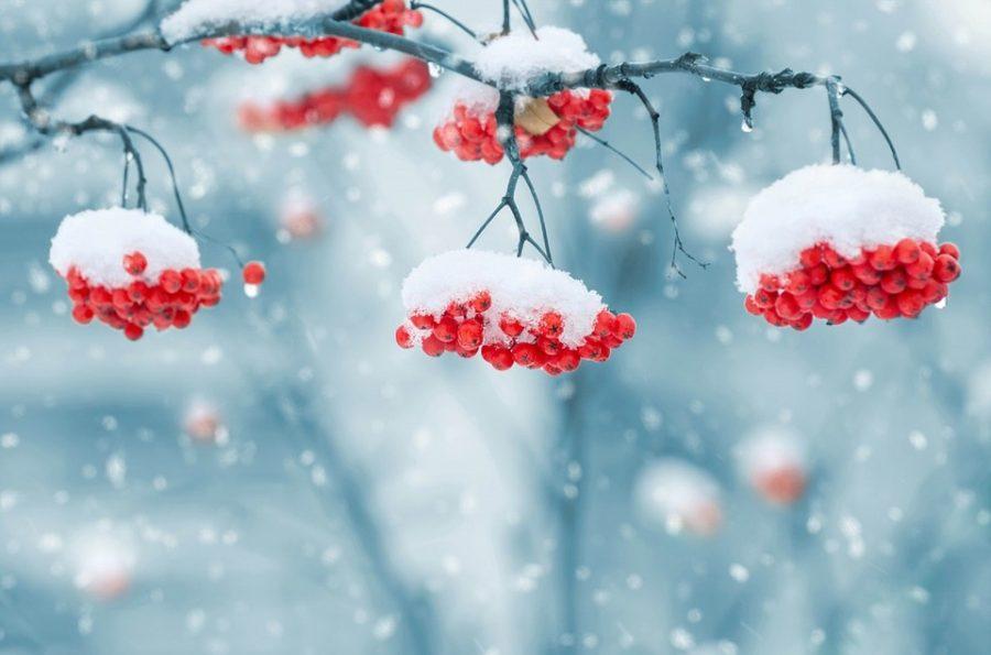 Синоптики: на неделе в будни в Кузбассе пройдёт снег