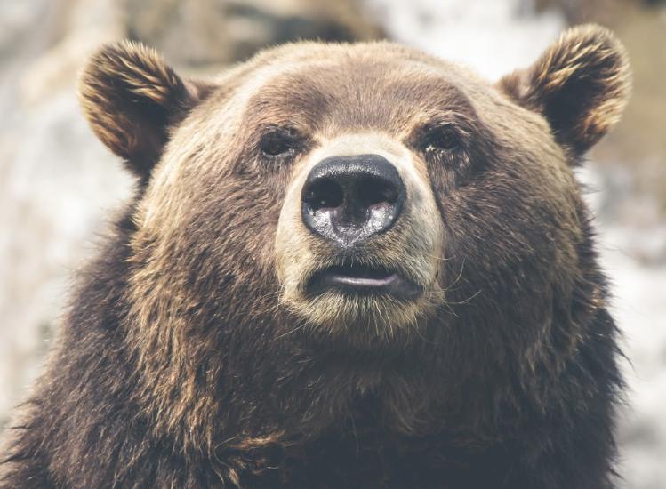 В Кузбассе 15-летний подросток вместе с другом заблудились в лесу и пережили встречу с медведем
