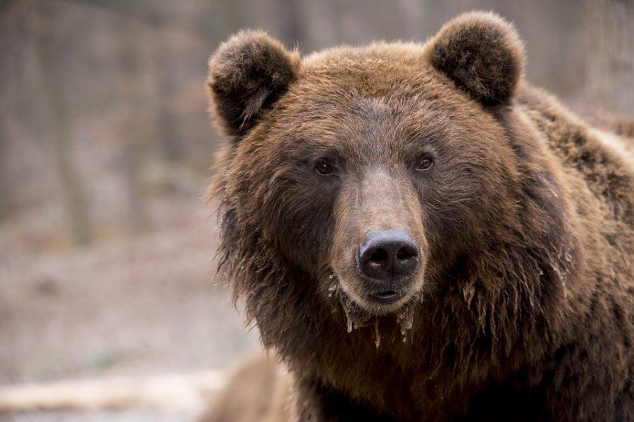 ВНовокузнецке удороги увидели медведя