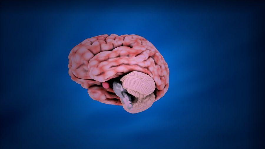 Американские учёные выявили связь особенностей мозга с уровнем доходов