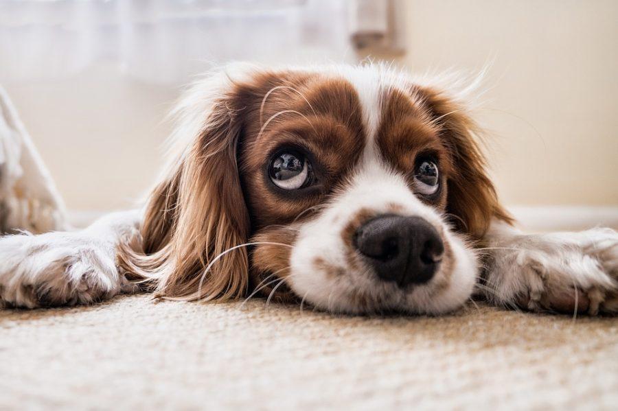 Названа самая уродливая собака года