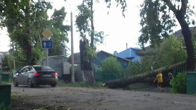 В Сети опубликованы фото последствий сильного ветра в Кемерове