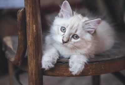 Кемеровчанка выпала из окна и получила травмы, пытаясь достать котёнка
