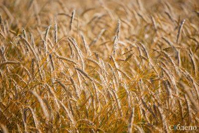Кузбасские аграрии получат более 60 млн рублей субсидий на топливо