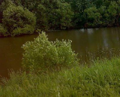 В Кемеровском районе в пруду утонул трёхлетний ребёнок