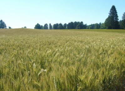 Россельхозбанк увеличил кредитование сезонных работ на 20%