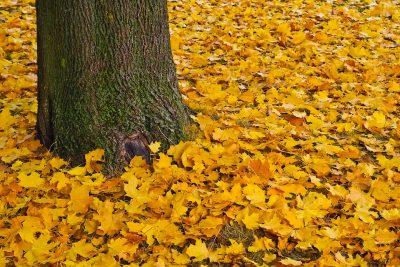 Синоптики дали предварительный прогноз погоды на октябрь в Кузбассе