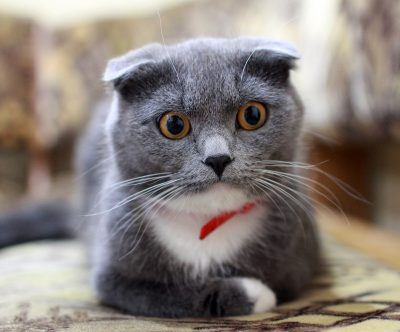 Кемеровчанин продаёт кота за 5 млн рублей