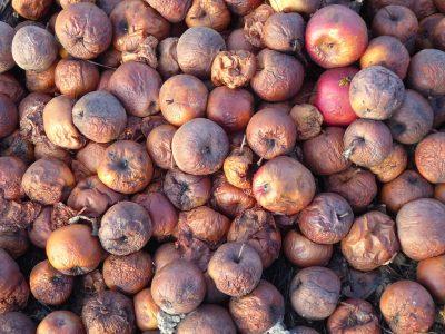 В Кузбассе оштрафовали бизнесмена за продажу гнилых яблок