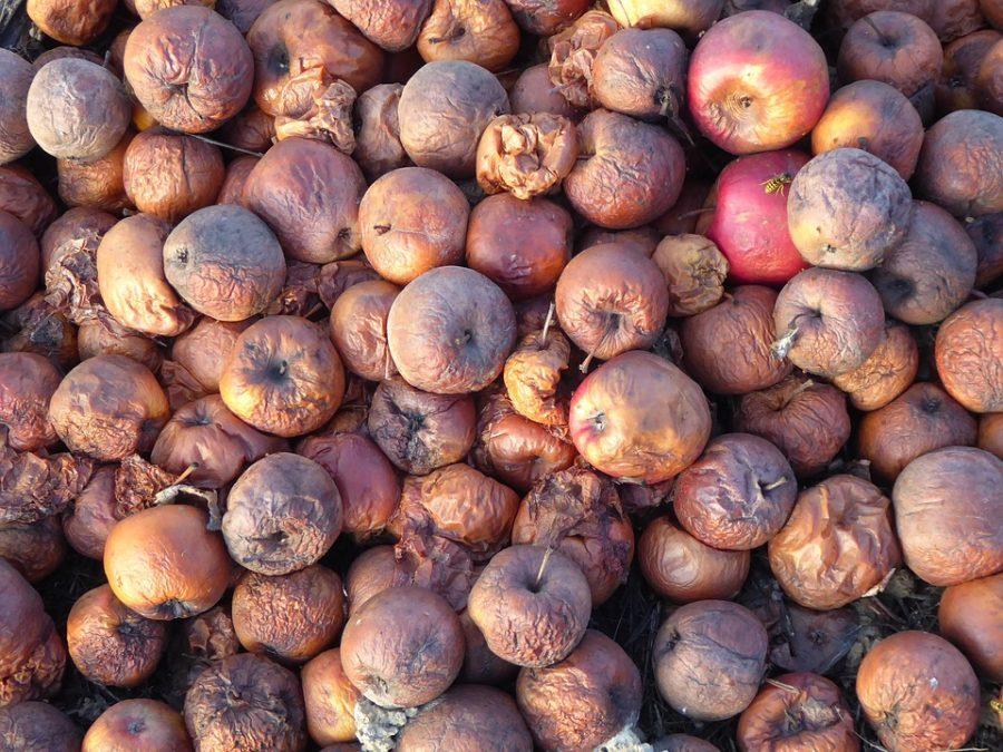 В Кузбассе бизнесмена оштрафовали за продажу гнилых яблок