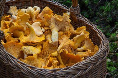 В Кузбассе спасатели вывели из леса двух заблудившихся грибников