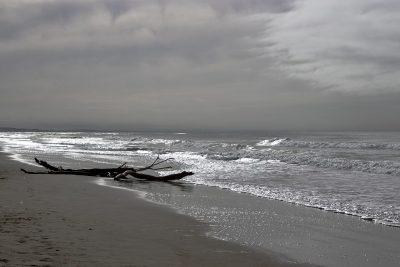 На побережье Новой Зеландии нашли гигантское пульсирующее существо