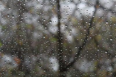 В начале недели в Кузбассе прогнозируют туман, мокрый снег и дожди