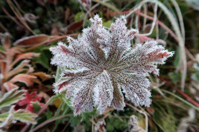 В Кузбассе зафиксировали температуру в -2°С и мокрый снег