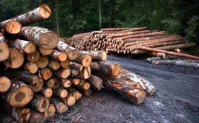 Кузбассовец срубил деревья для строительства бани и попал под суд