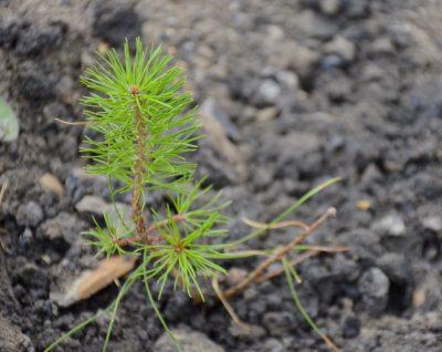 УК «Кузбассразрезуголь» провёл экологическую акцию «Зелёная волна»