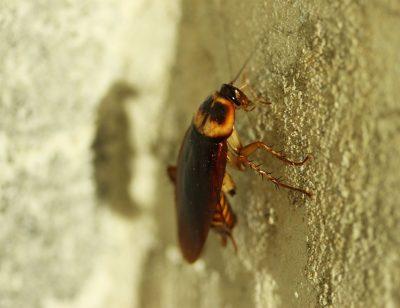 Кемеровская УК заплатит 15 тысяч за рыжих тараканов в пятиэтажке