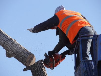 В Кузбассе подростка убило спиленное дерево