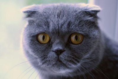 Новокузнецкий кот «повесил» на своих хозяев долг в 200 тысяч рублей