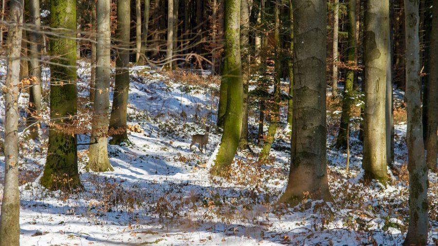 В Кузбассе Росгвардия поймала браконьеров
