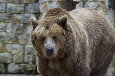 Мэрия Прокопьевска заинтересовалась мужчиной, гулявшим с медведем на поводке