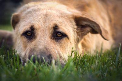 Стало известно, кто убил собаку возле новокузнецкой многоэтажки