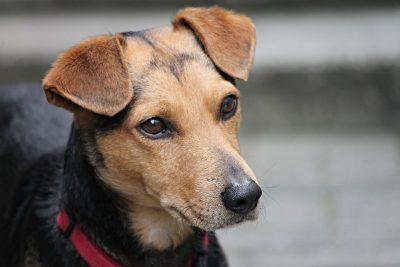 Видео: в Новокузнецке зарезали собаку возле подъезда многоэтажки