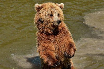 Кто выгуливал медвежонка в кузбасском городе