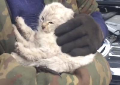 Из Кемерова в Тисуль: кузбасский котёнок проехал 250 км под капотом