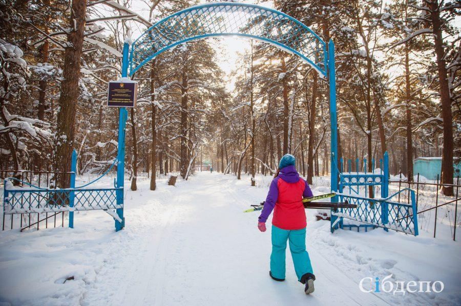 Сосновый бор в Кемерове сделают более комфортным