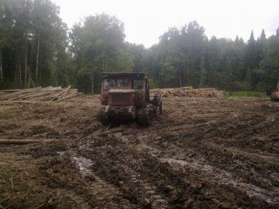 Наломал дров: кузбассовец незаконно вырубил деревья почти на 16 миллионов