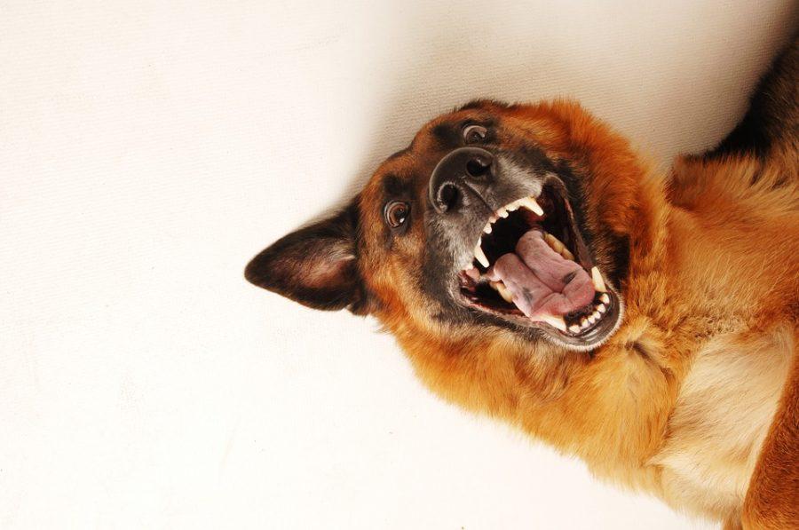 В России запретили мучать животных