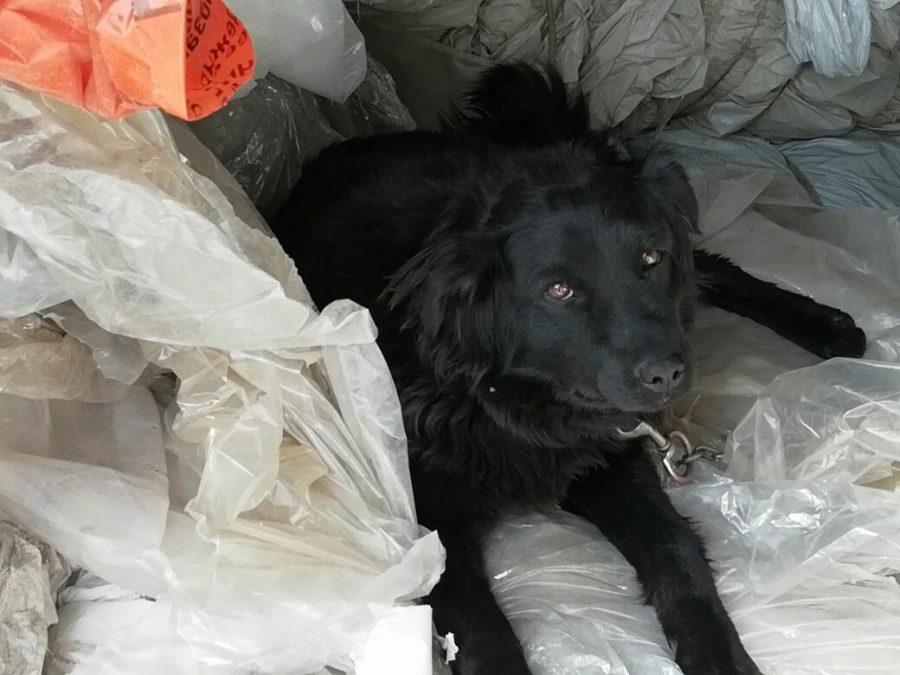 Обыкновенный садизм: в Кемерове воры искалечили собак