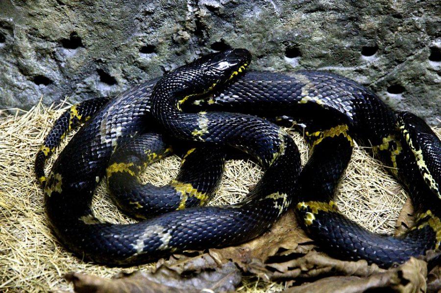 Опасная игра: в ТРЦ ребёнка после квеста ужалила змея