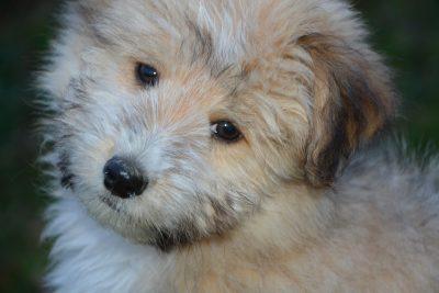 Соцсети: кузбасские подростки зверски убили собаку