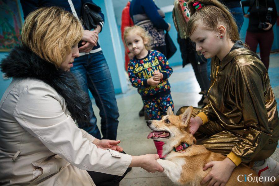 Кемеровчане пожертвовали крупную сумму бездомным животным