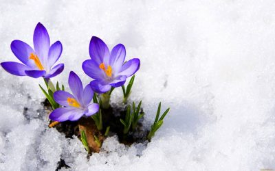 Весны не будет? Синоптики дали прогноз погоды в Кузбассе на воскресенье